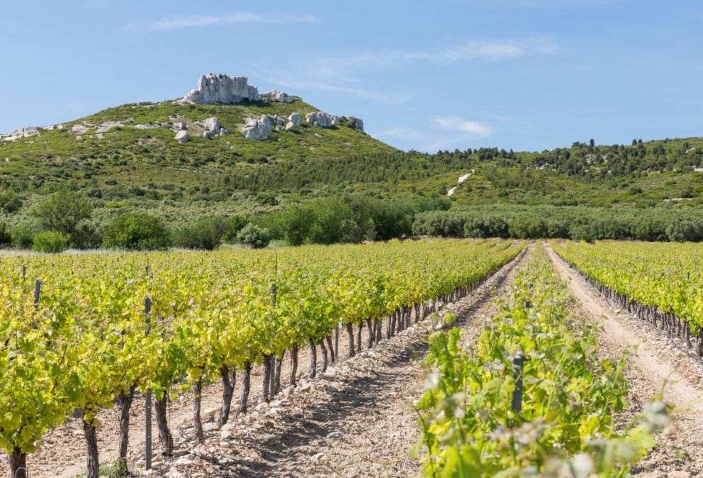 vigne provence coteaux aix vin olive