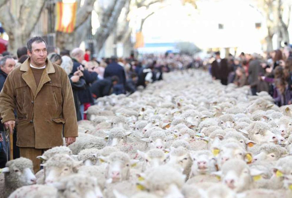 berger fete istres mouton
