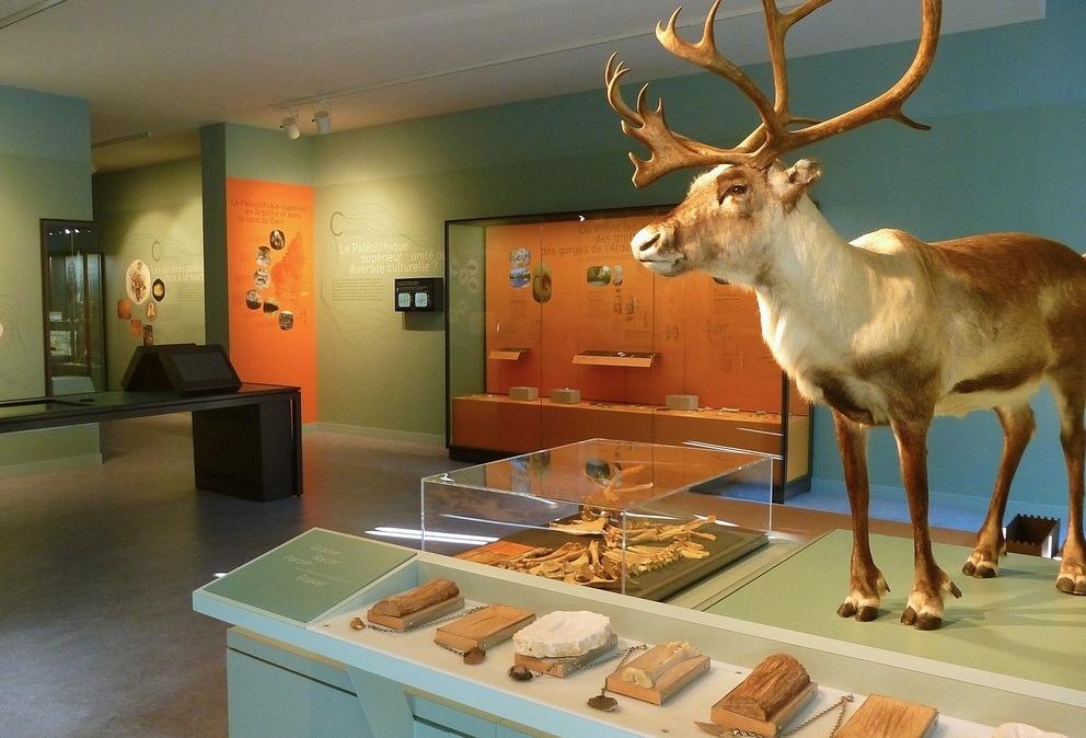 musee quinson prehistoire