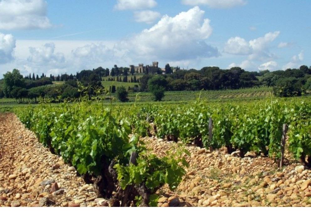 vigne chateauneuf du pape