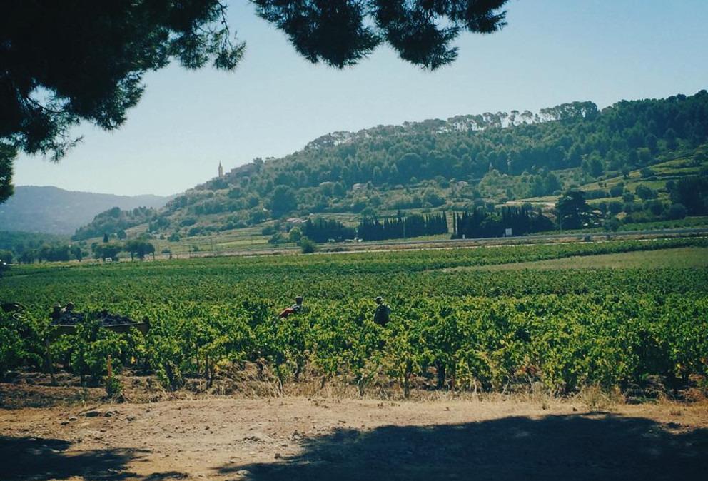 vins de bandol