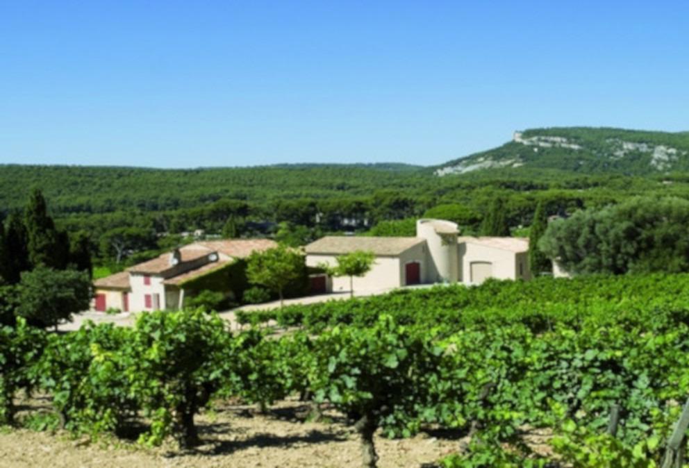 cassis vins paternel