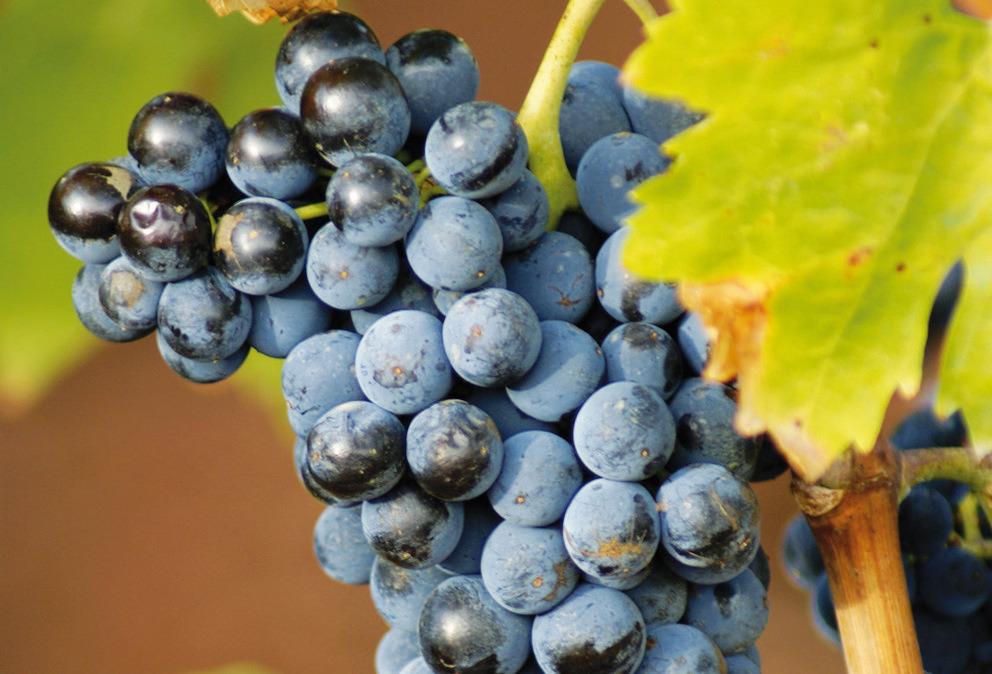 vins bandol cassis