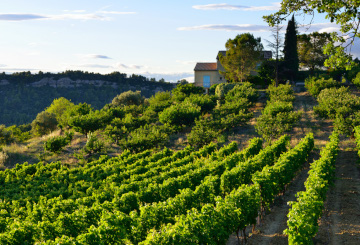 Bandol wine - Cassis