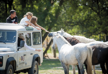 Jeep Safari Camargue