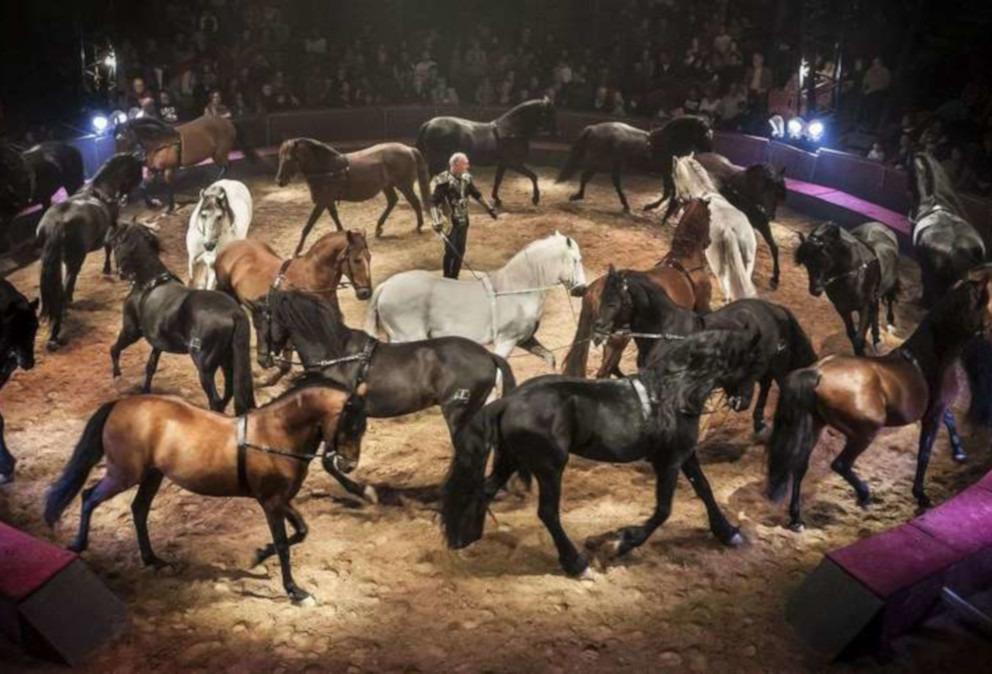 show equestres gruss