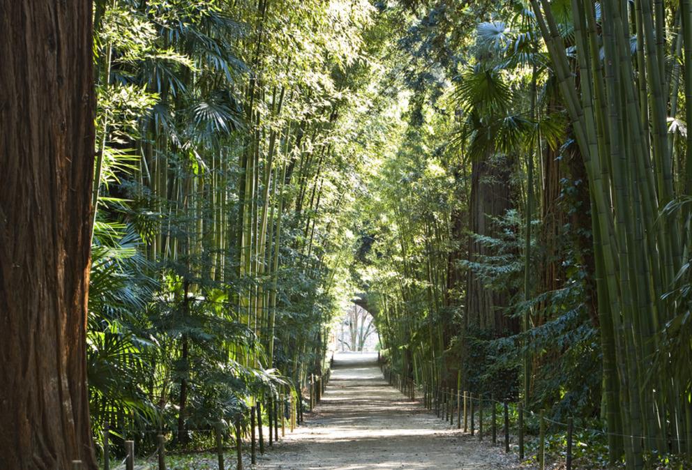 bambouseriaie