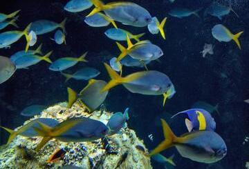 Monaco et Aquarium